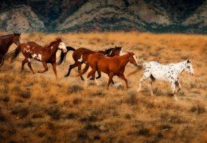 разноцветные-лошади